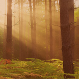image of forest