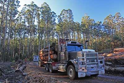 Logging truck carting logs