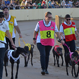 People walking greyhounds ahead of a race