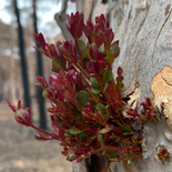 Regrowth from the fire