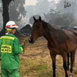 Animal Health representive feeding horse
